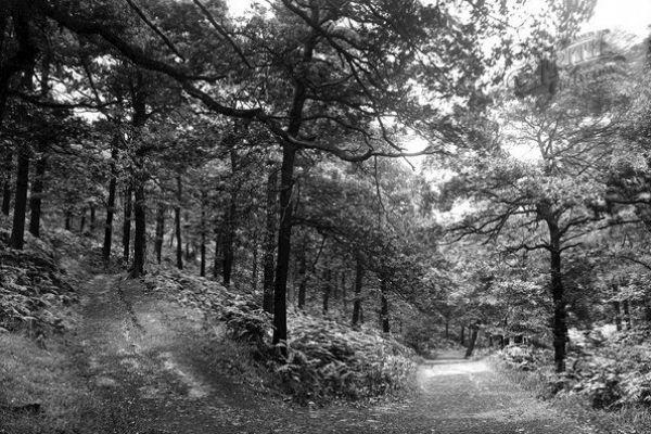 shipley-north-cliff-woods-1922954DFCB1-BC5D-02F6-D61B-7D962D89B8F5.jpg
